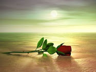 Ángeles me regala esta bonita rosa...