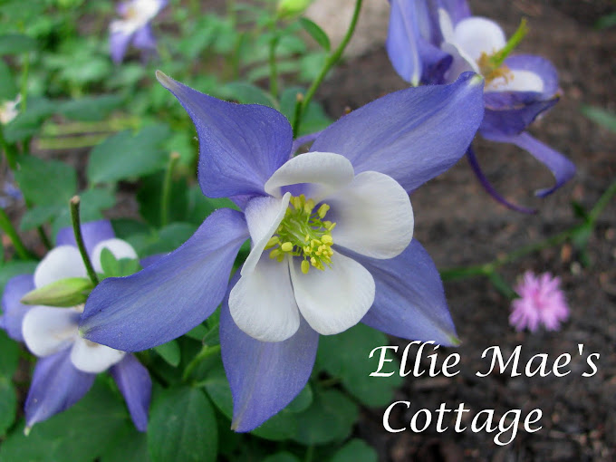 Ellie Mae's Cottage