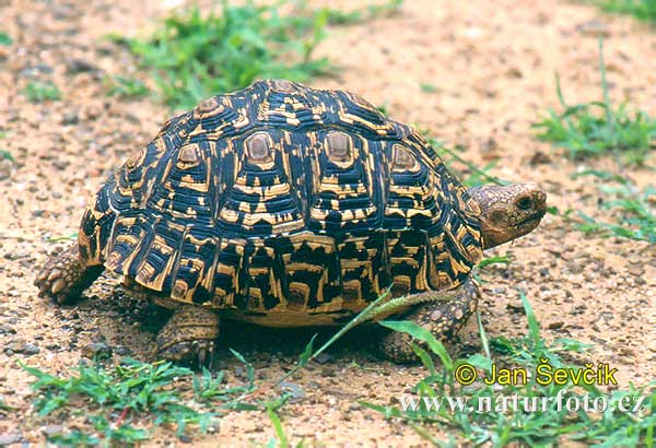 MAshooq: Turtles and Tortoises