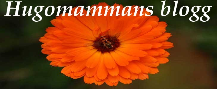 Hugomammans blogg