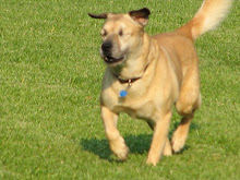 Butch:  Blind Dog Running