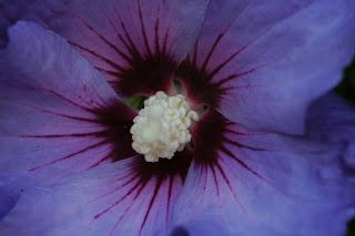 flower, macro, Bodelwyddan Castle