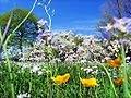 Musim Bunga