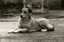 Rettung für Rumänien's Streunerhunde