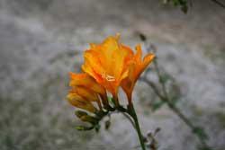 una humilde flor