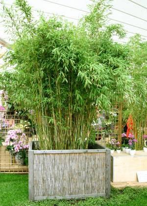 gartenbambus im kubel – sweetmenu, Garten ideen gestaltung