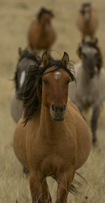 Mustang Dun