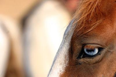 Caballo alazán con ojos azules