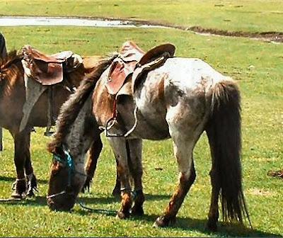 Pony Mongol