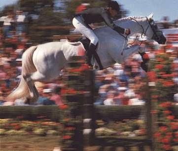 Abdullah horse01