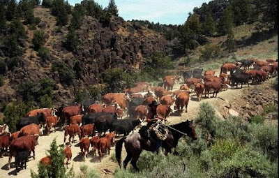 ganado vacuno conducido a los pastos