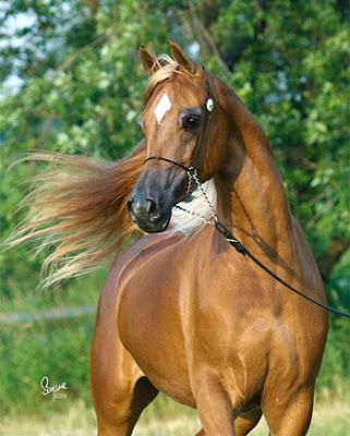 Estrella en caballo alazán