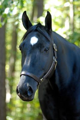 Estrella en caballo negro