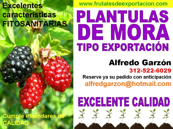 Semilla y plantulas para frutales de exportaci n for Viveros en granada