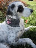 Doggie Bling