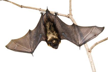 [morcegos.jpg]