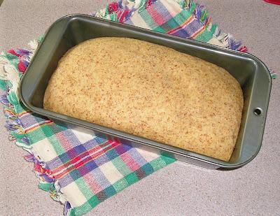 The Risen Whole Wheat Bread Dough