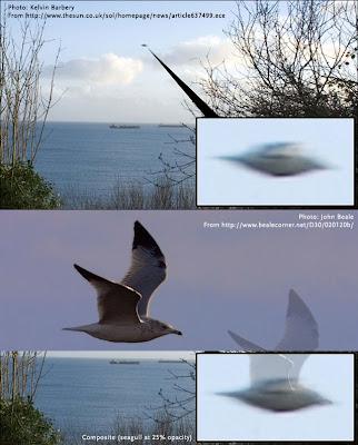Cornwall-Seagull By Lou Zucaro