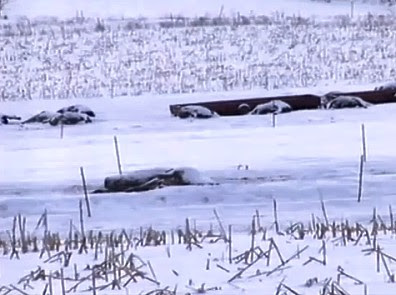 200 Dead Cows Found in Portage County Field