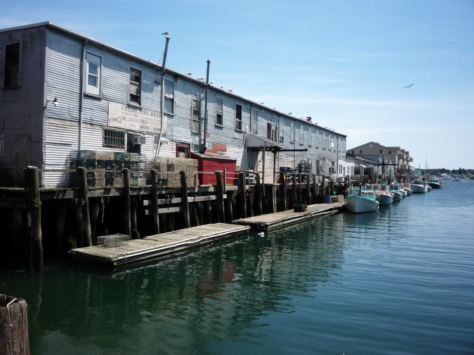 Daily pics photographs by caren marie michel harbor fish for Fish market portland maine