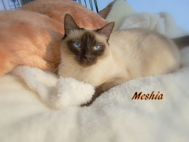 MESHIA  MAYLING