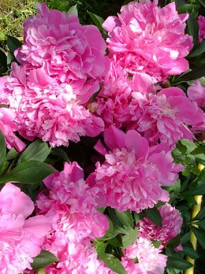 http://1.bp.blogspot.com/_Pao_AYOJTmc/SYsZlpLZHaI/AAAAAAAAAFI/wQ04gju1uKc/s400/bujori+roz.jpg