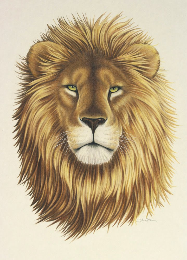 Lions face drawing - photo#28
