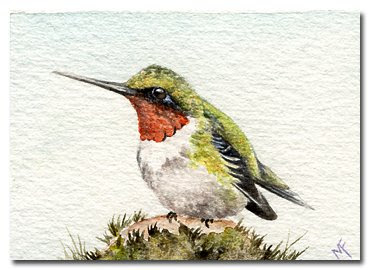 hummingbird watercolour painting