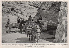 Donkey panniers Flamborough North Landing 1952