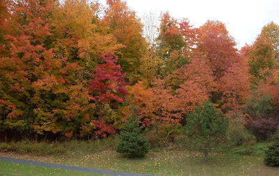 colorful fall foliage display near Victor NY