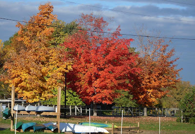fall foliage and boats, Erie Canal at Fairport NY (c)2008 jcb