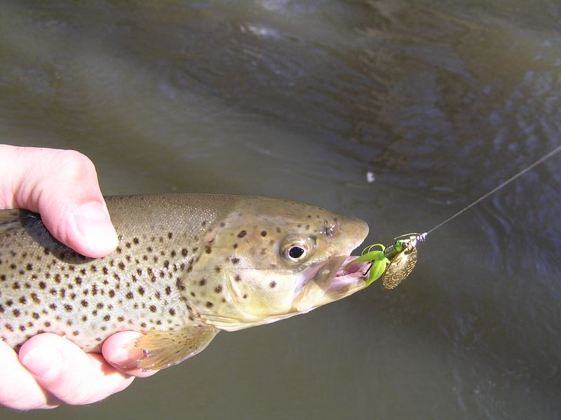 this is not a fly fishing blog - informal spinning gear overview, Fly Fishing Bait