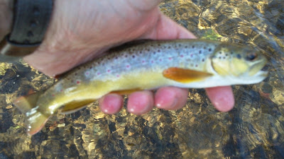 tenkara brown trout valley creek copper john