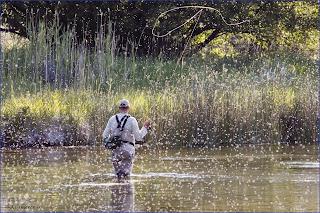 Idaho nature notes trico hatch at silver creek for Silver creek idaho fishing
