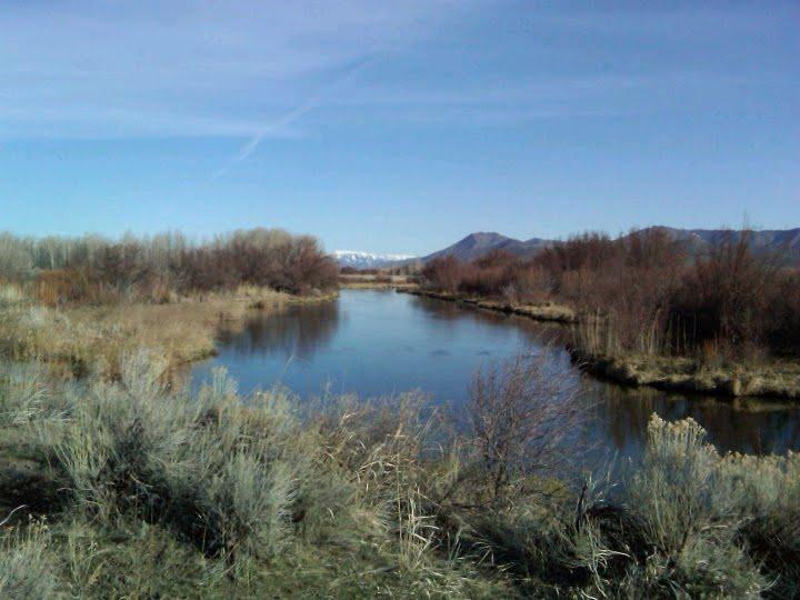 Idaho nature notes silver creek in spring for Silver creek idaho fishing