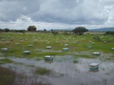 Parque de Fecundación inundado