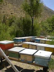 Colmenares en Palomo - Ovalle IV Región de Chile