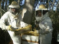 Alumnos cosechando miel