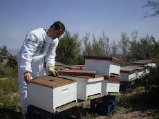 Mi primer apiario