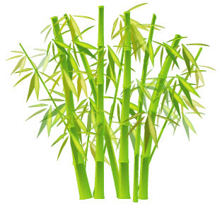 bamboo leaves properties bamboo leaves