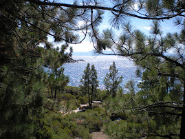 Tahoe through the Pines
