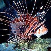 peces aguafria