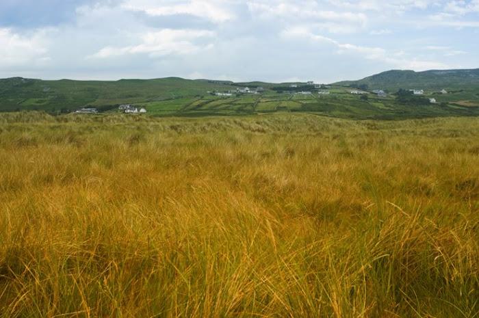 Campos de Irlanda