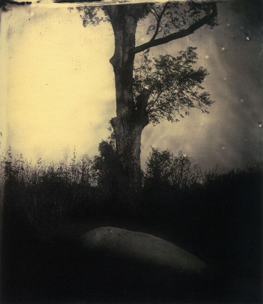 strange constellations: Sally Mann