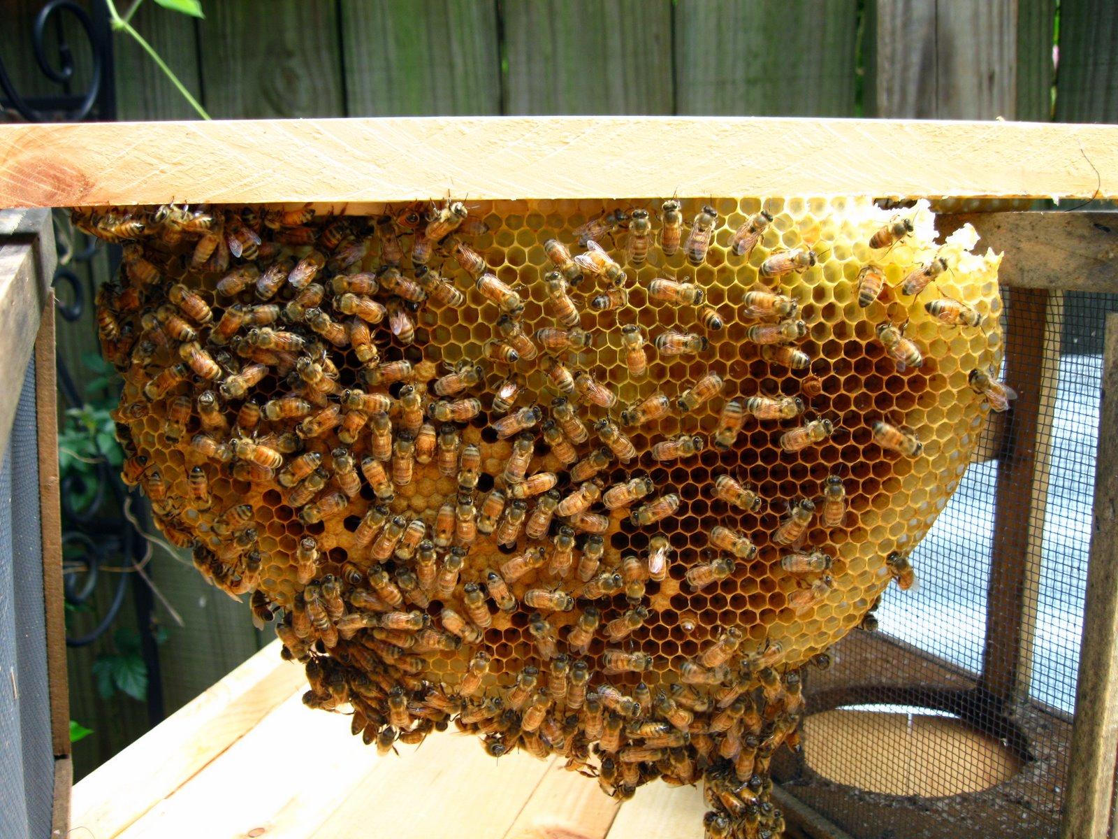 Honey Bees Top Bar Hive