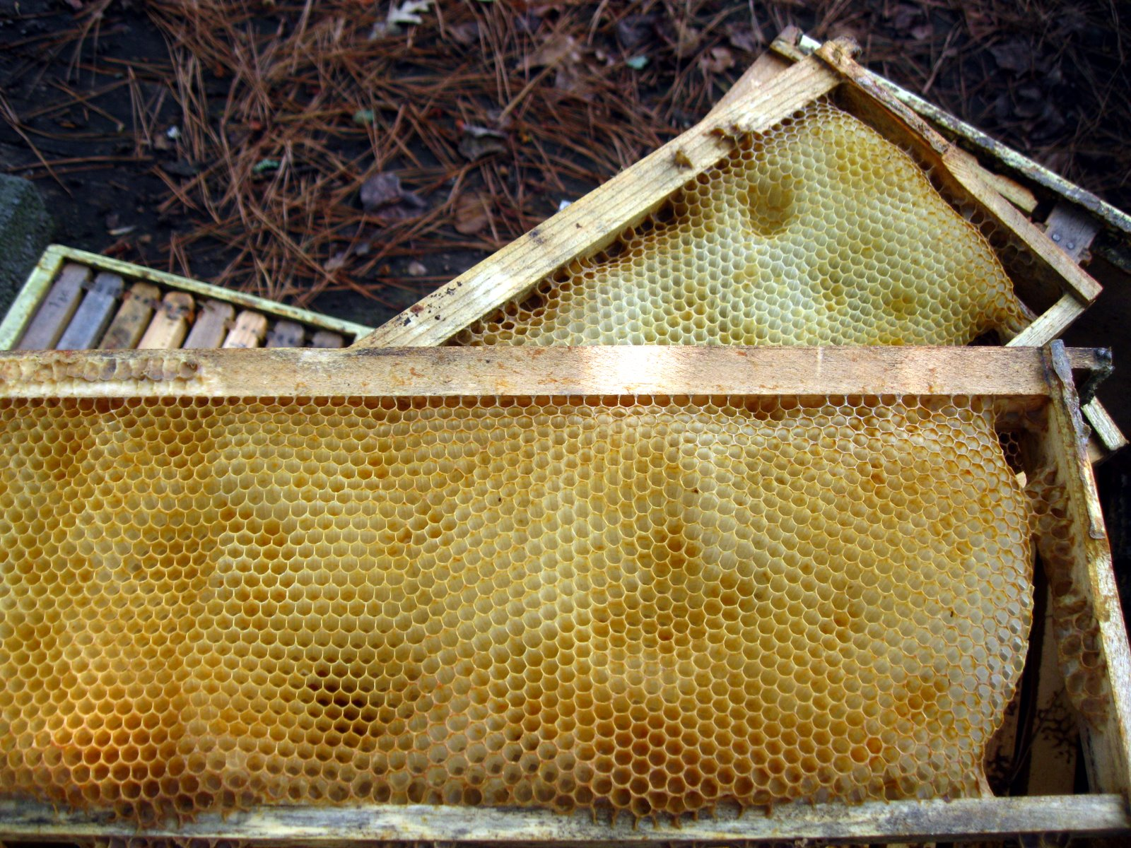 linda u0027s bees absconding vs colony collapse disorder
