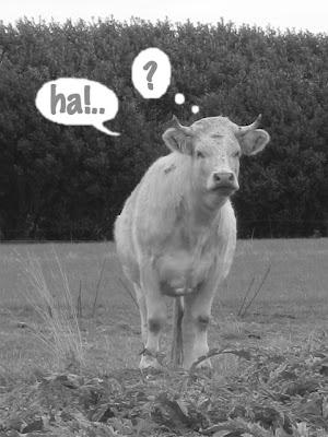 Bon Samedi Vache-HA!..%3F