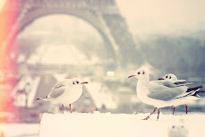 promised- 3 birds visiting pont des Arts