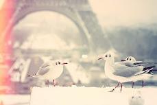 promised- 3 birds visiting pont des Arts
