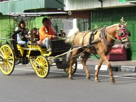 Andong is one of the traditional transportation that still exist in ...